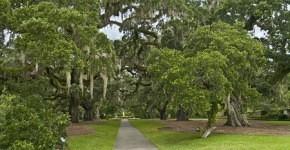 Area Guide:  Visiting Brookgreen Gardens